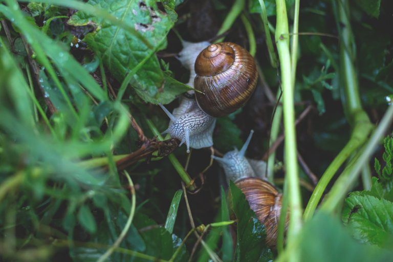 A Raw & Relevant Look at the Current Global Pandemic – Snails & Elephants